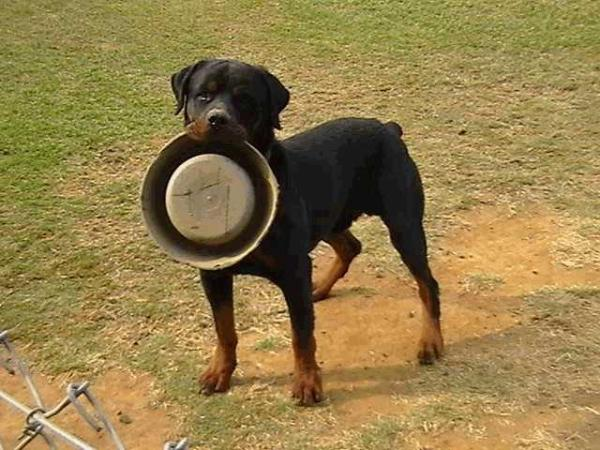 how-to-feed-your-dog